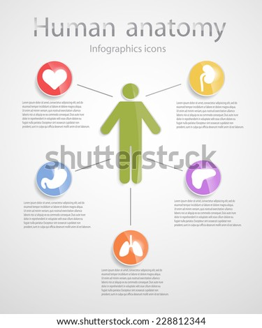 Human anatomy. Infographic glossy icons.EPS 10 file.  - stock vector