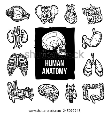 Image Result For Organ Map Human Body
