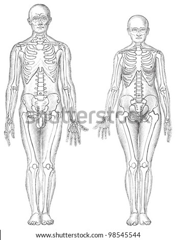 Human anatomy - man (left) and woman (right) / vintage illustrations from Die Frau als Hausarztin 1911 - stock vector