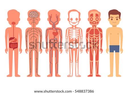 Human Body Anatomy Vector Illustration Male Stock Vector (Royalty ...