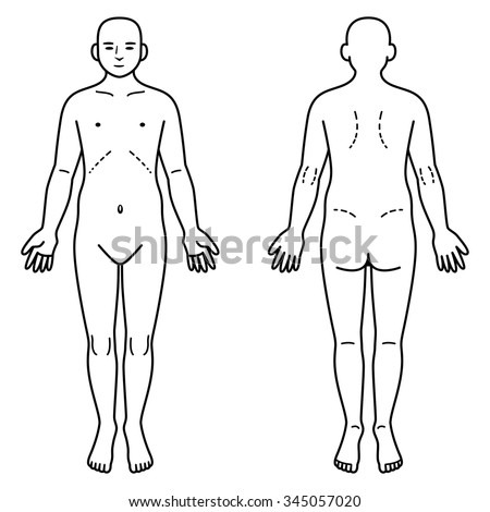 Human body front and back - stock vector