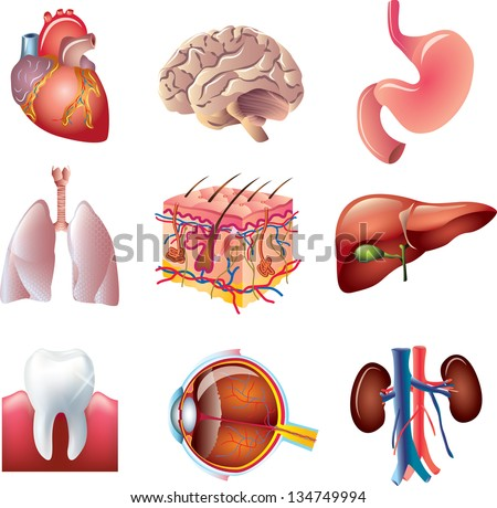 human body parts detailed vector set - stock vector