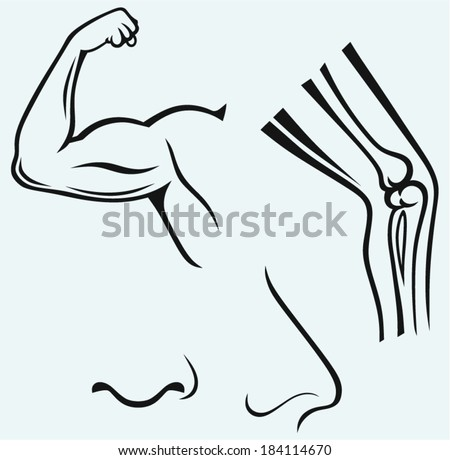 Human body parts. Hand, foot, nose. Isolated on blue background