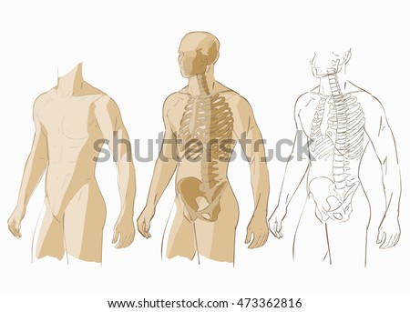 Human body parts skeletal man anatomy stock vector 473362816 human body parts skeletal man anatomy vector illustration isolated ccuart Image collections