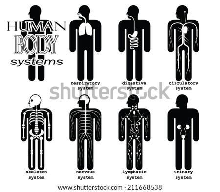 human body systems/ pictogram/ vector illustration set - stock vector
