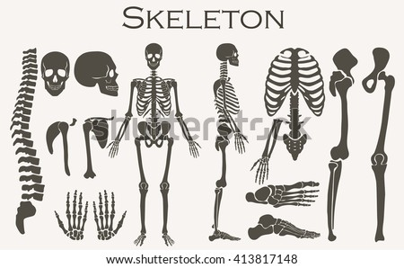 Human bones skeleton silhouette  collection set. High detailed Vector illustration. Bones skeleton, isolated, bones skeleton illustration, bones skeleton image. - stock vector