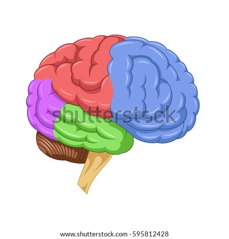 brain division organ structure stock illustration 198688025, Muscles