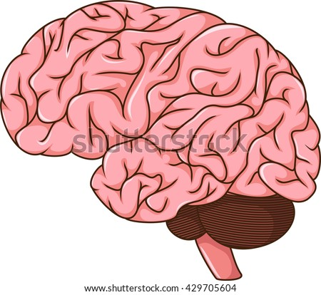 human brain cartoon stock vector 429705595 shutterstock