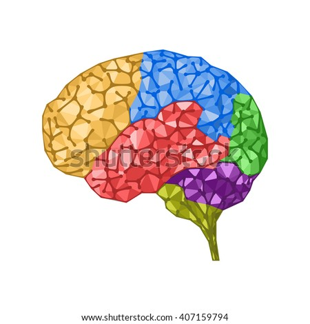 Human brain concept with colored zones. Brain wrinkles like connected network dots. Vector isolated illustration