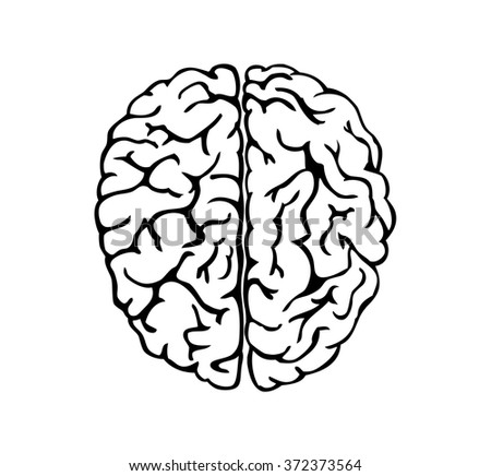 Human brain for medical design  - stock vector
