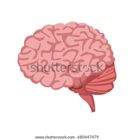 Human brain medical healthy memory anatomy stock vector 680447479 human brain for medical healthy memory anatomy design ccuart Images