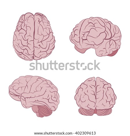 Human brain four views. Top, frontal, side, three-quarter. Flat brains vector icons eps10.