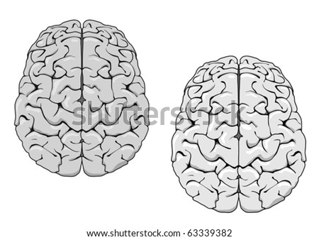 Human brain isolated on white as a concept of medicine. Jpeg version also available in gallery - stock vector