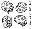Human Brain. Set of four views. Vector Illustration - stock photo