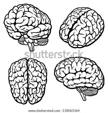 Human Brain. Set of four views. Vector Illustration - stock vector
