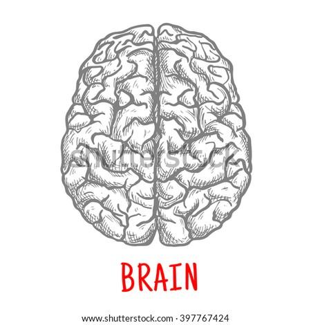 brain top view vector - photo #19