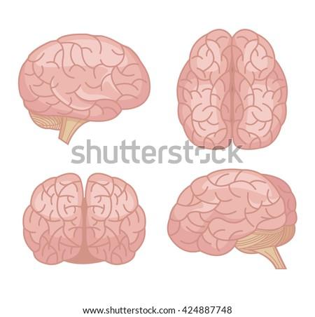 Human brain. Vector flat cartoon set - stock vector