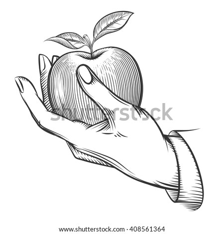 Human hand with apple drawn in engraving style. Apple fruit, nature, food apple fresh, engraving apple with leaf, vintage sketch organic, apple. Vector illustration - stock vector