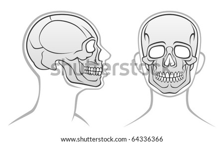 Human head - stock vector