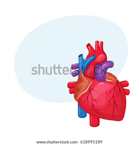 Human heart anatomy medical science vector stock vector 2018 human heart anatomy medical science vector illustration internal organ atrium and ventricle ccuart Gallery