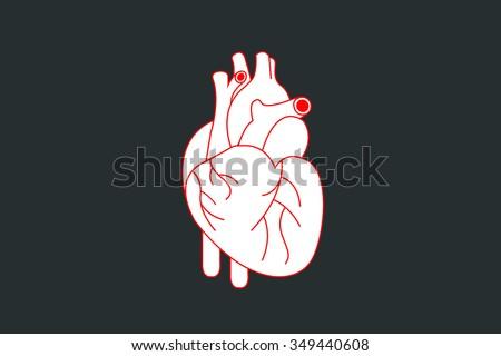 human heart design over dark background vector illustration / heart human / heart - stock vector