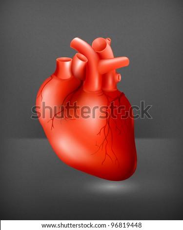 Human heart, eps10 - stock vector