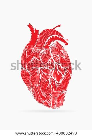 Human Heart Hand Drawn Vector Illustration Stock Vector 488832493 ...