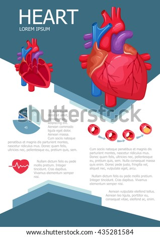 human heart chart images: Diagram of the human heart stock images royalty free images