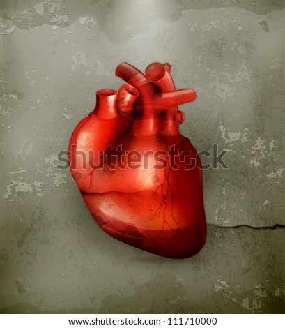 Human heart, old-style vector - stock vector