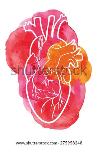 Human heart on a red watercolor background. - stock vector