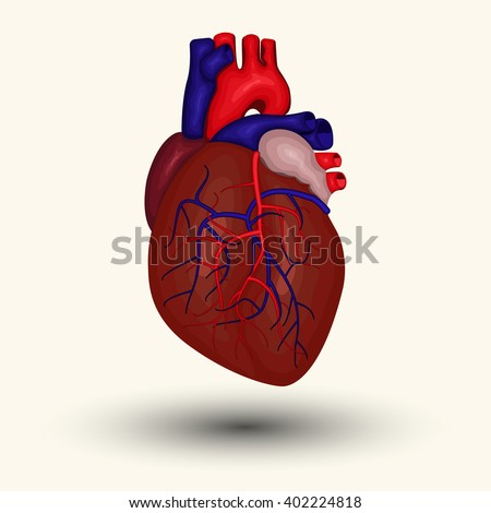 Human heart sign or icon cartoon designed, vector