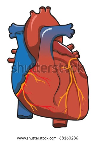 Human Heart System With Isolated White Background - stock vector