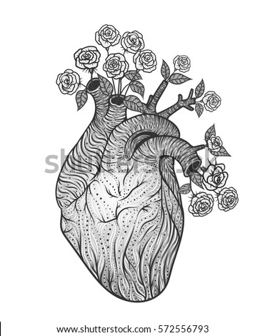 Human heart illustration vintage