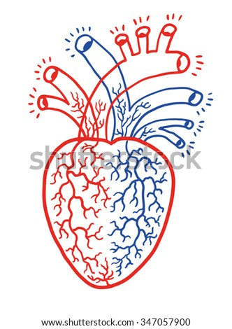 Human hearth - stock vector