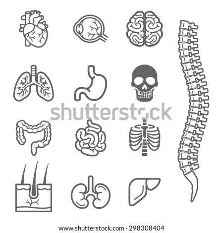 Human internal organs detailed icons set. Vector illustration - stock vector