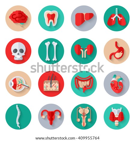 Human Internal Organs Flat Icons on Circles Set. Vector illustration. Skull and bones, liver and kidney, stomach, skin with hair, heart, man and woman reproductive system, spine, healthy tooth. - stock vector