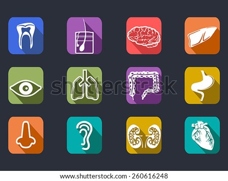 human internal organs long shadow icons set - stock vector