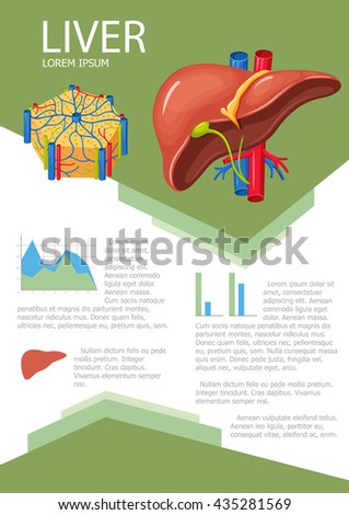 Human Liver Infographic Poster Chart Diagram Stock Vector (Royalty ...