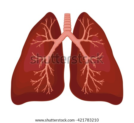 Human lung anatomy diagram stock vector 2018 421783210 shutterstock human lung anatomy diagram ccuart Gallery