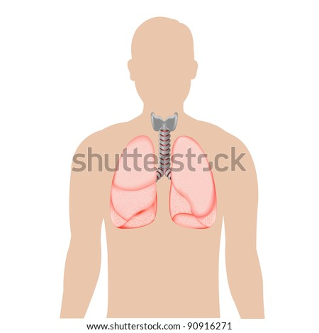Human Lungs, Isolated On White Background, Vector Illustration