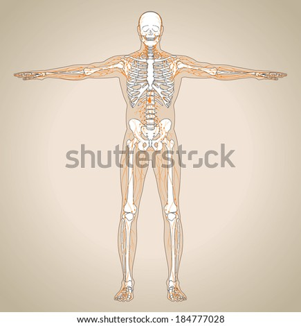 Human (male) lymphatic system. Vector illustration