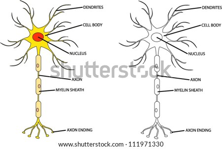 Human neuron cell - stock vector