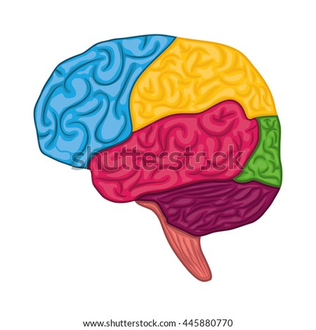 Human organ concept represented by brain icon. isolated and flat illustration
