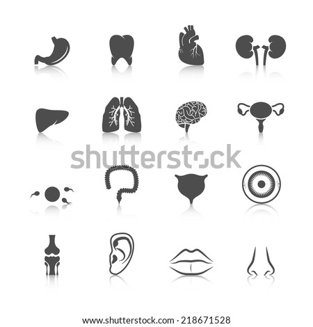 Human organs black icons set of kidney heart tooth liver lung isolated vector illustration - stock vector