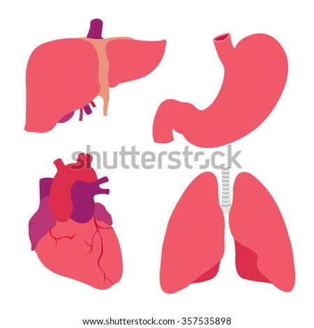 human organs. heart, liver, stomach, lungs. vector illustration - stock vector