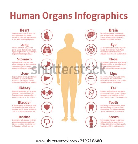 Human organs icons with male figure infographics set vector illustration - stock vector