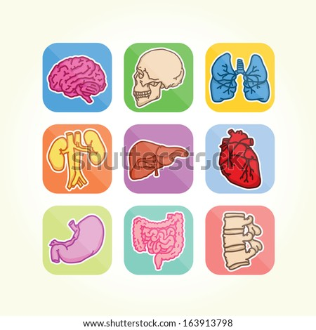 Human organs isolated vector icons - stock vector
