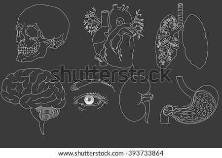 Human organs set  - stock vector