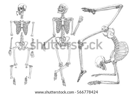 skeleton stock images, royalty-free images & vectors | shutterstock, Skeleton
