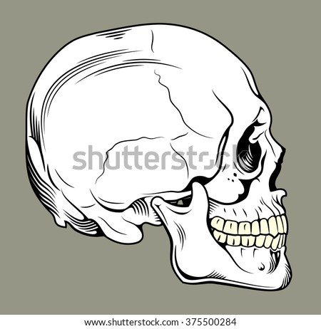 Human skull profile - stock vector